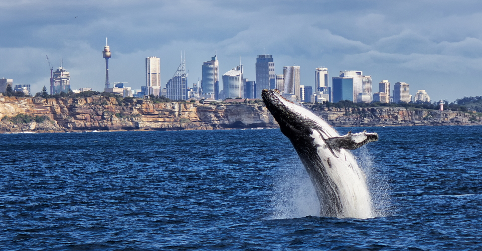 adrenalin whale watching sydney review