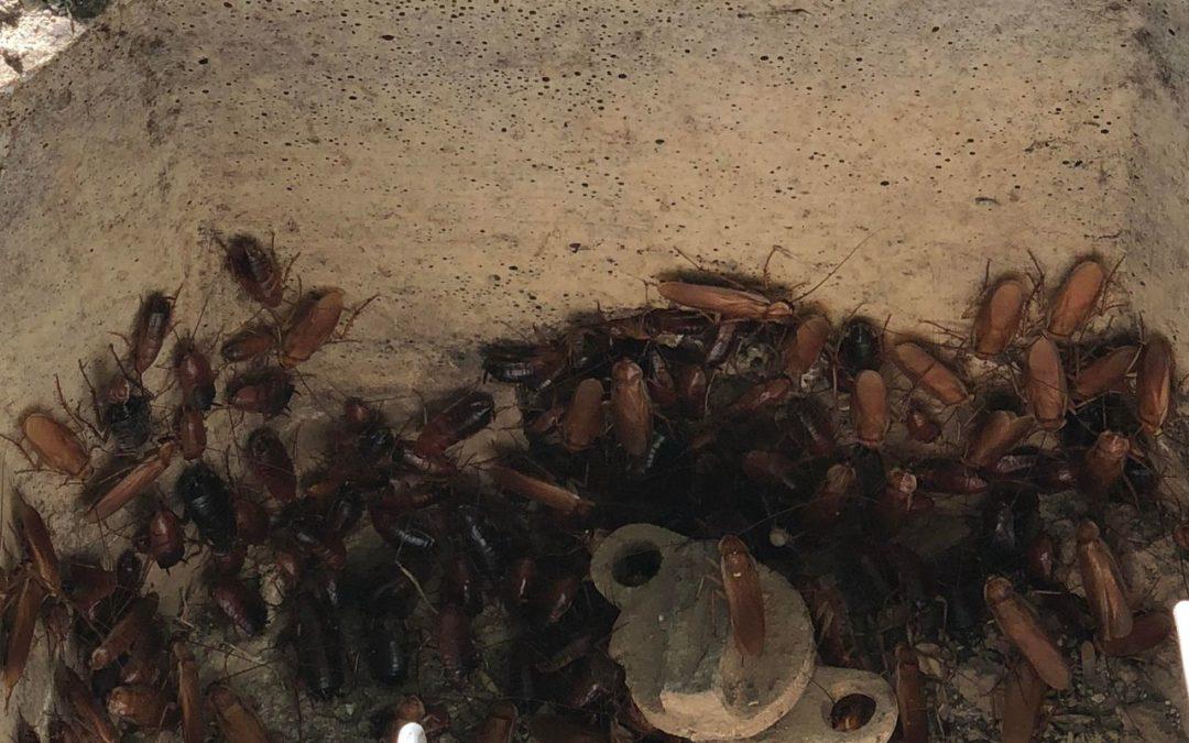 creepy crawly pest control reviews